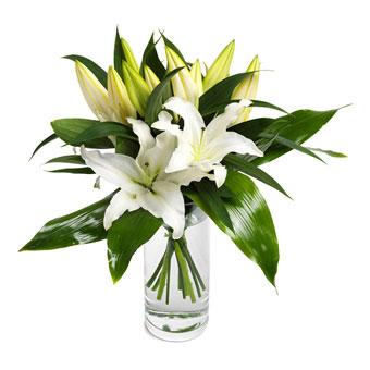 Livlige hvite liljer