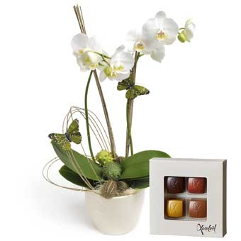 White orchid & chocolate