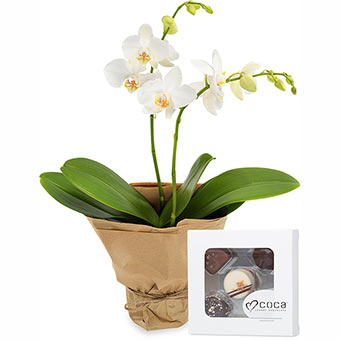 Orchid with chocolate