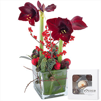 Amaryllis with chocolate