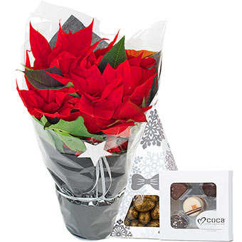 Poinsettia with candy