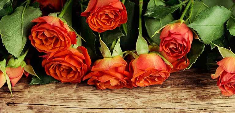 Ta vare på dine roser