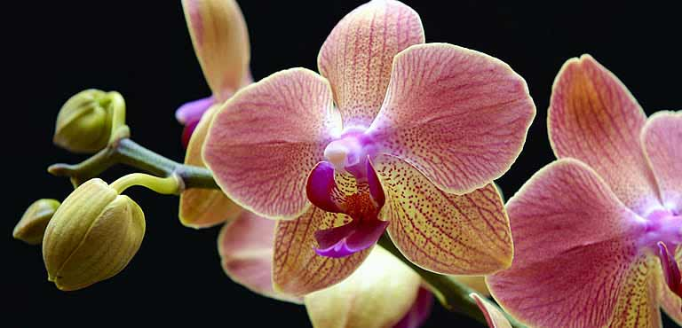 Take care of your orchids