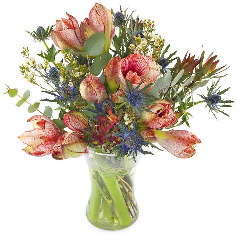 Amaryllis og tisler i vase