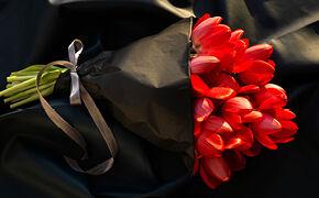 Spænstige tulipaner