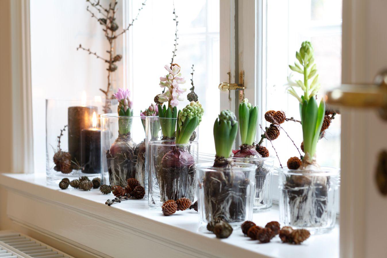 Hyacinth window