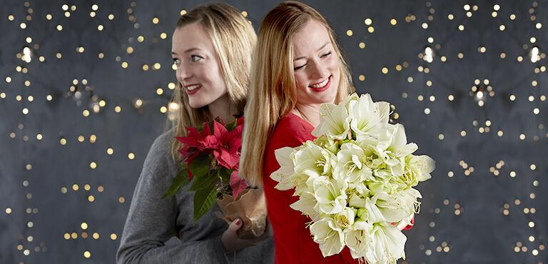 Alle Juleblomster